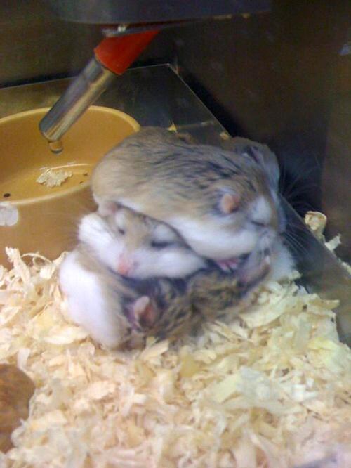 호불호 완전 나뉘는듯한 동물 갑 | 인스티즈